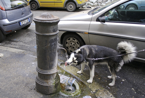 drinking-dog.jpg