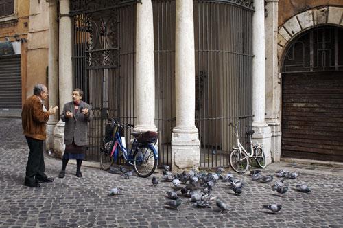 pigeon-c.jpg