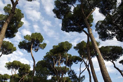trees-villa-borgese.jpg