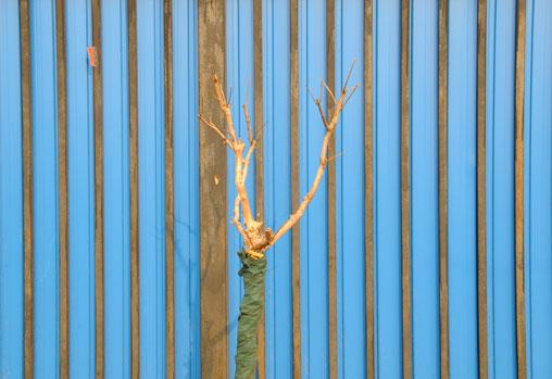 blue-fence4.jpg